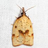 3706 - Mosaic Sparganothis - Sparganothis xanthoides *
