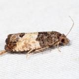 2906 – Eye-spotted Bud Moth – Spilonota ocellana *