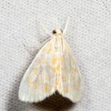 4869 - Common Glaphyria - Glaphyria glaphyralis *