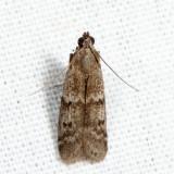 6032 - Eurythmia angulella *