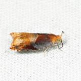 3376 - Ancylis apicana