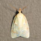 3725 – Maple-basswood Leafroller – Cenopis pettitana