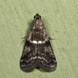 5721 - Apomyelois bistriatella
