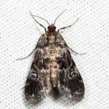 4755 - Waterlily Leafcutter - Elophila obliteralis