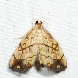 4897 - Purple-backed Cabbageworm - Evergestis pallidata