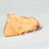 4653 - Red-crossed Button Slug - Tortricidia pallida