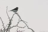 Birds of the UAE