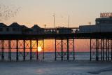 Brighton Starling Mermeration