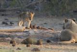 Kruger Park 2015 - South Africa