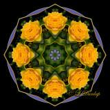 Rose Kaleidoscopes