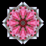 * 17. Pink Rose On Silver-White Kaleidoscope, One