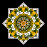 * Birch Tree With Backlit Leaves-- Northwoods Kaleidoscope