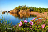 **** 113 - Silver Bay: Wild Roses on Clifftop