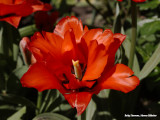 Rood - red