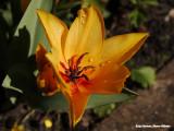 Oranje - Orange