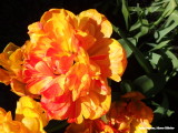 Geel en rood - Yellow and red