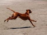 Avila Dog Beach 7-5-09