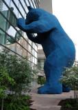 Reflections - Blue Bear