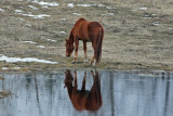 Reflections -  Zarr