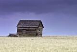 Montana Wheatfield