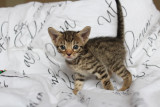 4 weeks old little toddler :)