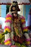 Thiru Adipooram uthsava Oorkolam - Perumal Kovil