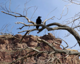 A raven looks on