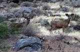 Deer down near the river