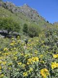 Askifou gorge - spring flower display