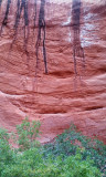 Silver Falls-Choprock Loop: Choprock Canyon - Poison ivy fork