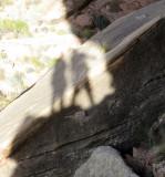 Salt Creek canyon  Cave granary- Us!