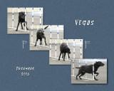 Misstear 8x10 Vegas