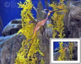 Stranger from the Deep BSR_2195 (Weedy Sea Dragon)