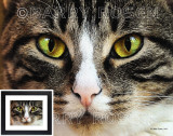 Those Eyes! Painting Effect Print BRZ_0558 (House Cat)