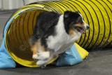 Paws 'N Effect CPE Agility Trial, Jan 31-Feb 1, 2015