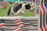 Mid Atlantic USDAA Agility Showcase, April 17-19, 2015