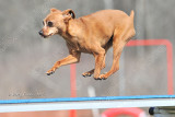 Mid Hudson Kennel Club AKC Agility Trial, April 25-26, 2015