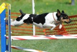 PCNUT AKC Agility Trials, May 7-10, 2015