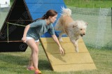Stockade CPE Agility Trial, May 30, 2015