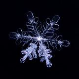Snowflake #2-Color