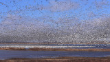 Goose Mayhem