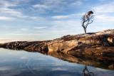 Binalong Bay Lone Tree, Tasmania
