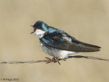 Larks and Swallows