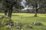 Dehasa Meadows in Extremadure