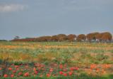 Hokaido-mark nær Gyldensteen strand, Nordfyn