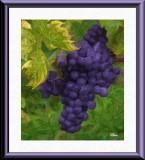 Grapes by Bari, December, 2013