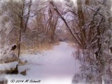 Snowy Creek Side Horse Path