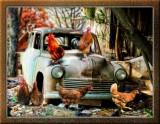 Abandoned Car by Steve. July 2014