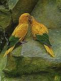 Gold parakeets