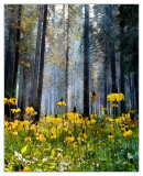 Flowered Forest by Chris Duffy, April 2015